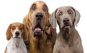 Πατήστε στην εικόνα για να τη δείτε σε μεγέθυνση.  Όνομα:  surprised-dogs1.jpg Εμφανίσεις:  2 Μέγεθος:  36,1 KB ID: 140505