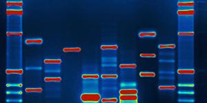 Πατήστε στην εικόνα για να τη δείτε σε μεγέθυνση.  Όνομα:  DNA-796x398.jpg Εμφανίσεις:  554 Μέγεθος:  39,6 KB ID: 185218